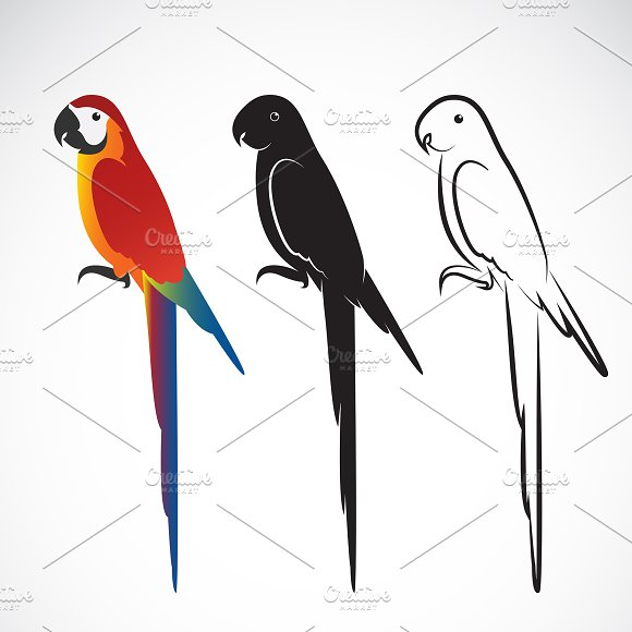 Vector of a parrot (Macaws). Animal.