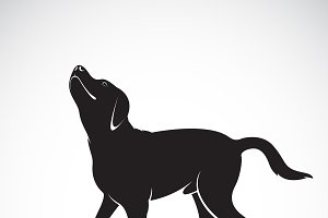 Vector of a dog labrador. Animal.