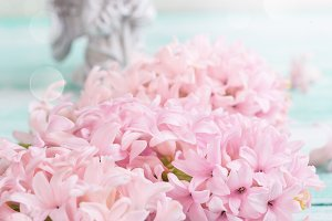 Postcard with fresh pink hyacinths