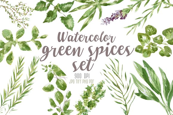 Watercolor green spices set