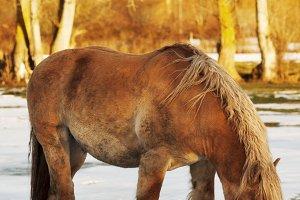 hispano breton horse in  mountains