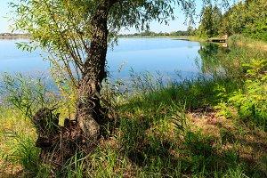 Summer lake landscape