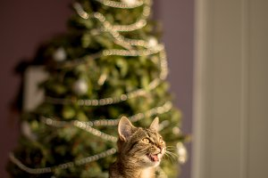 Talking cat with the Christmas tree