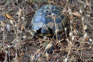 Turtle me
