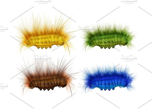 Different Colorful Caterpillars