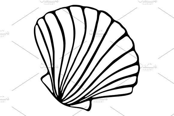 Sea shell seashell ink sketch vector