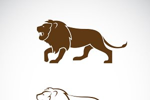 Vector of a male lion design. Animal