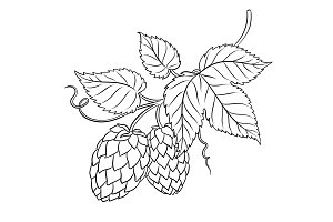Branch of hops coloring book vector