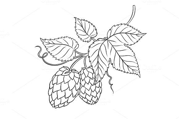 Branch of hops coloring book vector in Illustrations