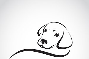 Vector of a dog labrador. Pet.