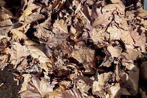 fallen leaves in autumn