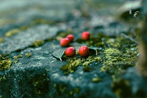 cranberries forest fruits green mold