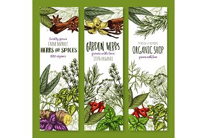 Vector banners sketch spices and herbs seasonings