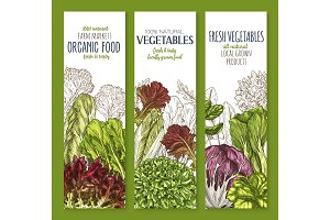 Leaf vegetable sketch banner set of salad greens