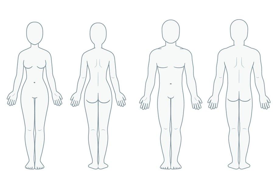 Human Body Unlabeled Diagram - Human Body AnatomyHuman Body Anatomy
