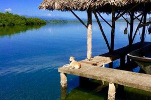 Dog and Dock, Panama