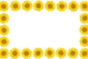 Frame of sunflower flowers