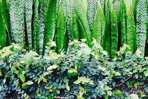 Green Hedge, Panama