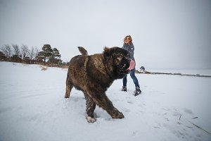 Delicate girl with her big Caucasian Shepherd dog having fun in winter forest