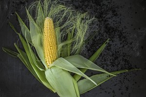 Fresh corn, black background