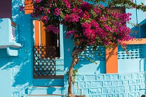 Bright blue house and tree with red flowers