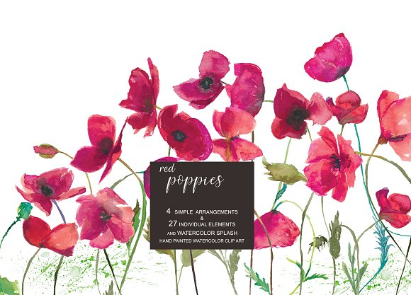 Hand Painted Poppy Clip Art in Illustrations