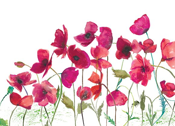 Hand Painted Poppy Clip Art in Illustrations - product preview 2