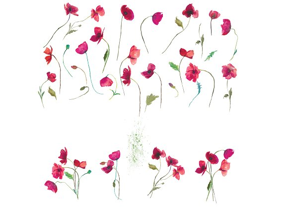 Hand Painted Poppy Clip Art in Illustrations - product preview 3
