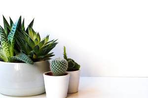Succulents Styled Stock Photo