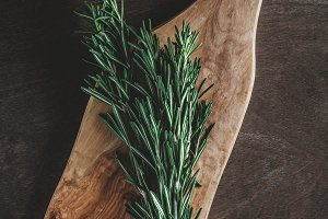 The branch of fresh rosemary