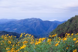 Mountains and yellow flowers