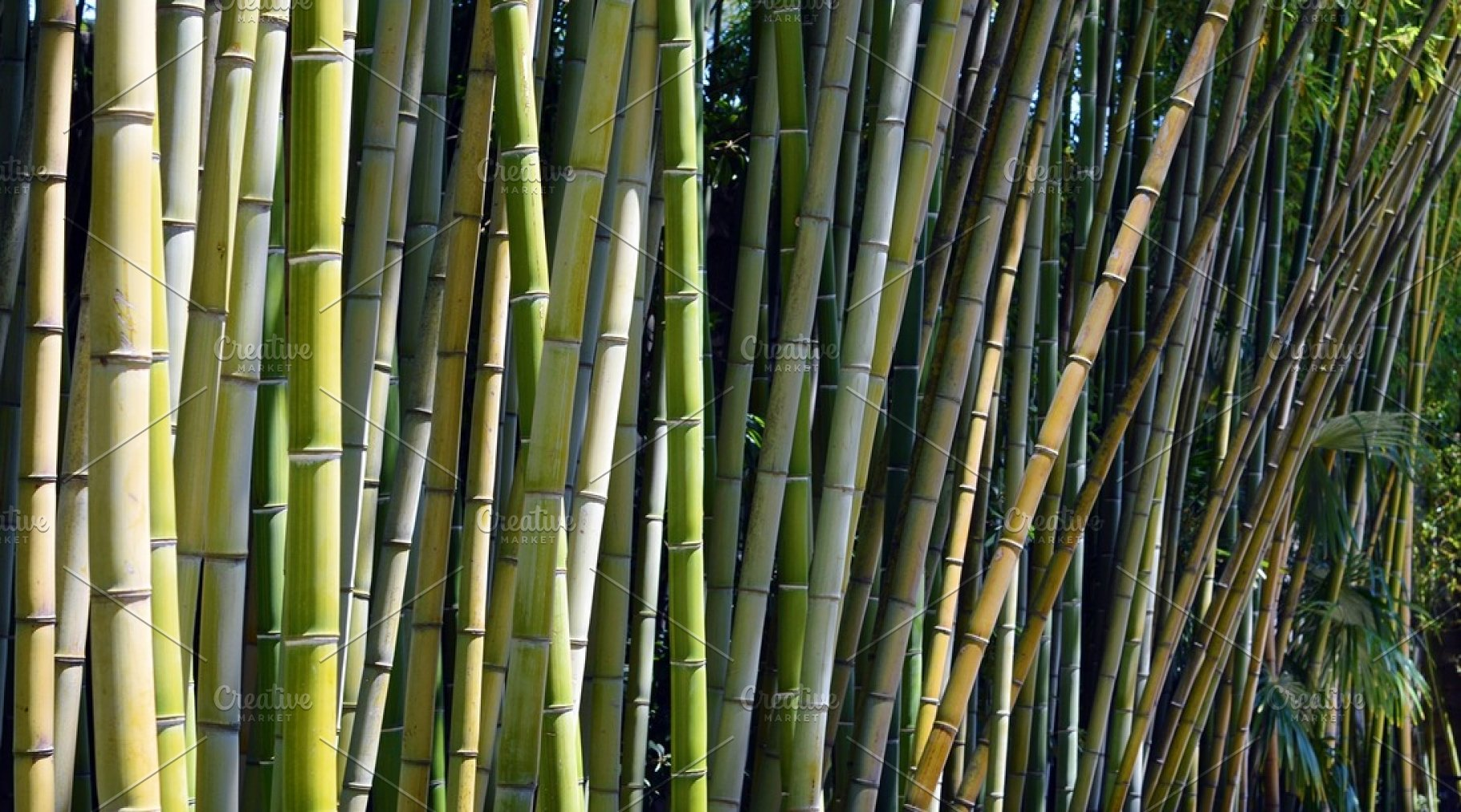 Bamboo Trees High Quality Nature Stock Photos Creative Market