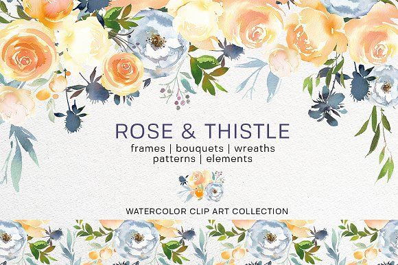 Rose Thistle Watercolor Florals