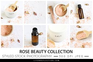 Rose Beauty Stock Photography