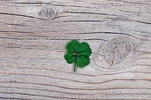 Four Leaf Clover on rustic wood
