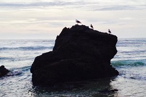 Seabirds On Rock, Big Sur, CA