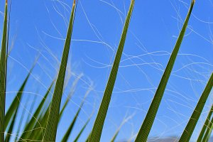 Desert Grass, Palm Springs, CA