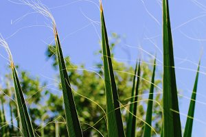 Grass, Palm Springs, CA