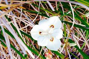 Happy Flower, Sonoma, CA