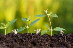 miniature farmer take care growning