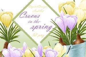 Spring crocus clipart
