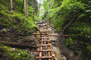 Abandoned old wooden bridge in jungle forest.