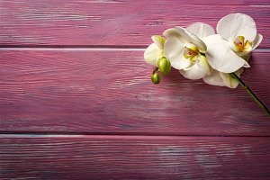 Orchid on pink wooden background