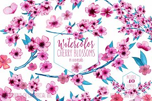 Cute Watercolor Pink Floral Graphics