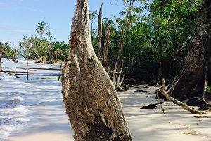 Driftwood, Panama