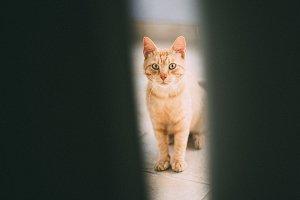 Ginger cat through closing door