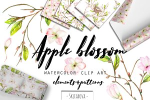Apple blossom. Watercolor clip art.