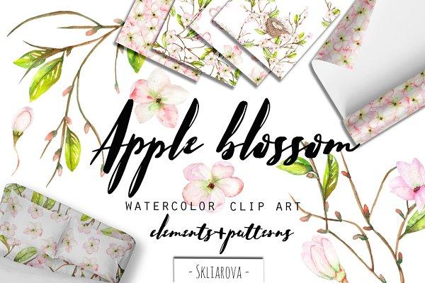 Apple blossom. Watercolor clip art.