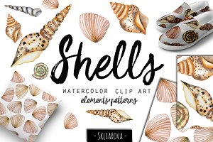 SeaShells. Watercolor clip art.
