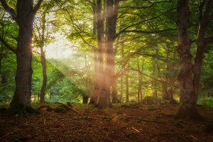 Sun rays throught a green forest in